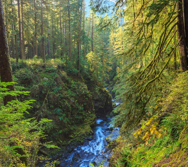 Sol duc wasserfälle in olympic nationalparks usa
