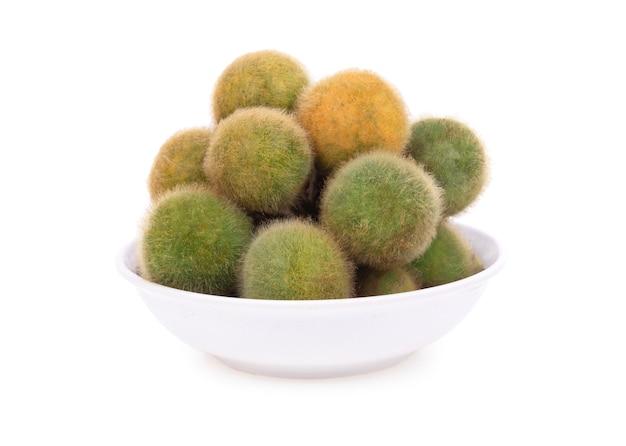 Solanum ferox isoliert auf weiß