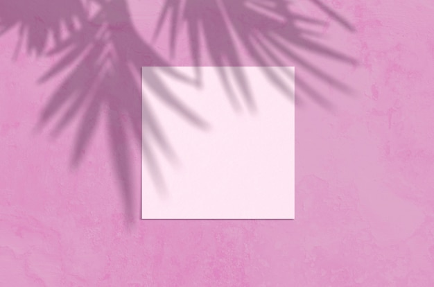 Sommer moderne sonnenlicht schreibwaren szene. leere grußkarte der flachen draufsicht mit palmblatt- und zweigschattenüberlagerung auf rosa hintergrund des schmutzes.