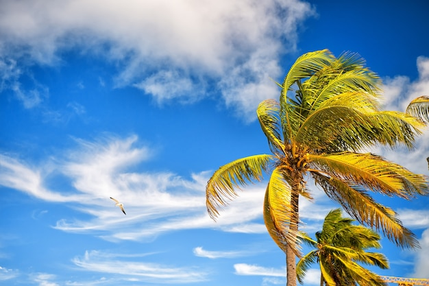 Sommer naturszene. kokospalmen mit sonnigem blauem himmel