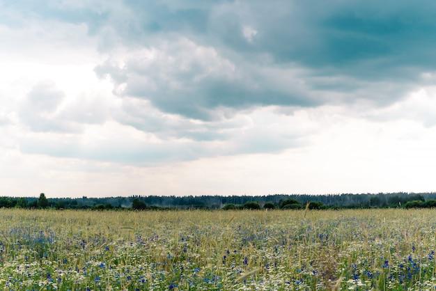 Sommer naturwiese mit wilden blumen