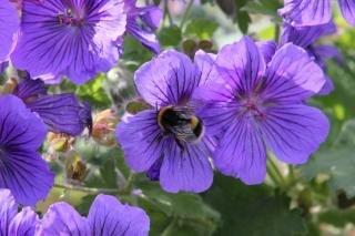 Sommer pollen