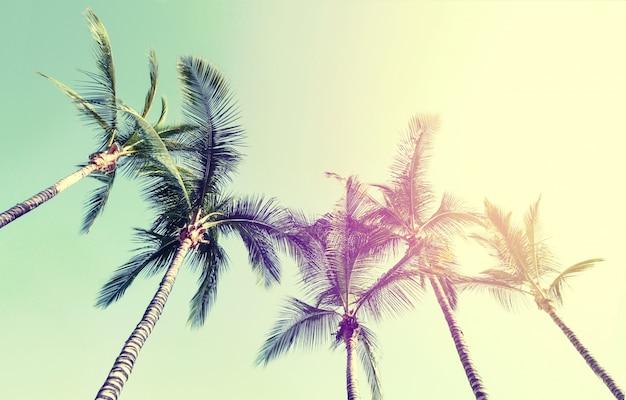 Sommer reise urlaub konzept. schöne palmen auf blauem himmel hintergrund. toning