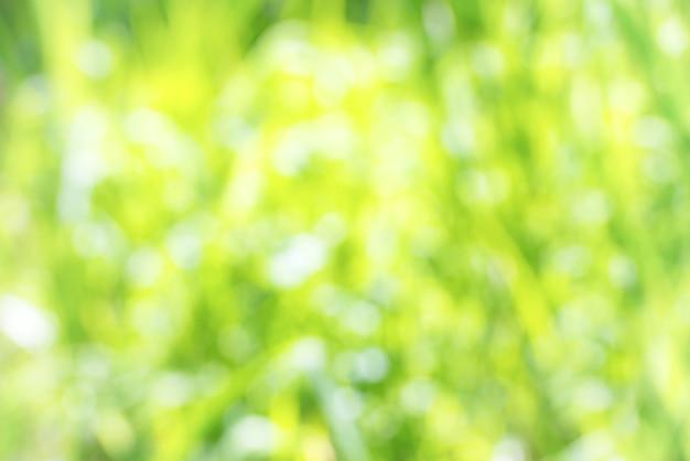 Sommer sonniger hintergrund. grünes defokussiertes feld mit grünem gras