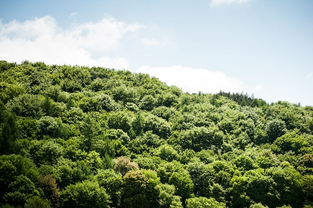 Sommer sonniger laubwald