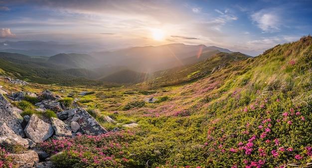 Sommerabend in den bergen, landschaftspanorama mit sonnenuntergang, schönen roten blumen und majestätischem himmel