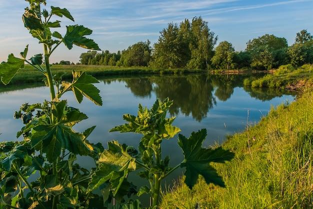 Sommerabend über dem kleinen teich im wald.