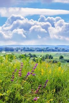 Sommeransicht mit wilden blumen auf der wiese und malerischem blauem himmel mit weißen lockigen wolken