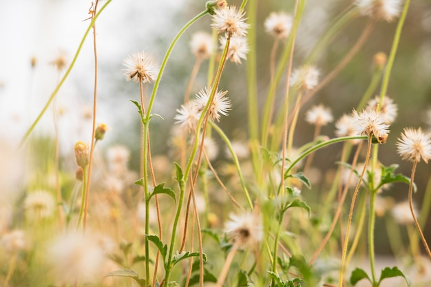 Sommerblumenhintergrund