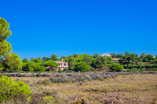Sommerdorf mit dem großen baum seitlich gelegen im blauen himmel
