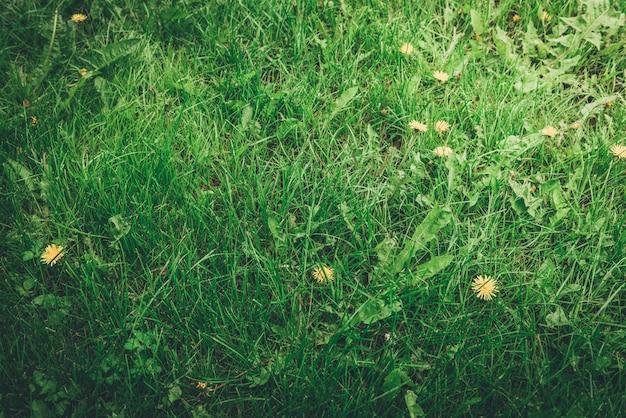 Sommergrashintergrund oder -beschaffenheit.