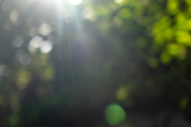 Sommergrüner garten. schöner natürlicher verschwommener bokehhintergrund mit hellen sonnenstrahlen.