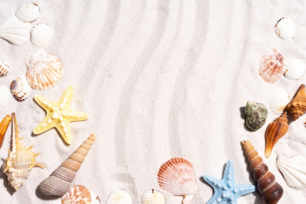 Sommerhintergrund mit muscheln und muschelschalen auf dem sand