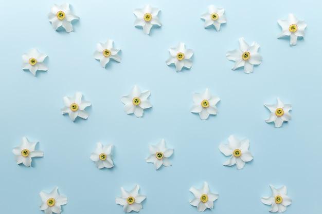 Sommerkollektionskonzept flach auf blauem hintergrund mit verzierten blütenköpfen aus weißer narzisse. foto in hoher qualität