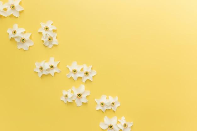 Sommerkollektionskonzept flach auf gelbem hintergrund mit verzierten blütenköpfen der narzisse. foto in hoher qualität