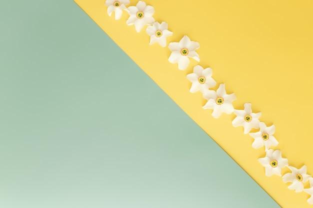 Sommerkollektionskonzept flach auf gelbem und grünem hintergrund mit verzierten blütenköpfen der narzisse. foto in hoher qualität