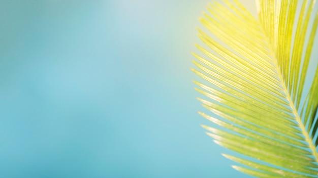 Sommerkomposition mit palmblatt und kopierraum