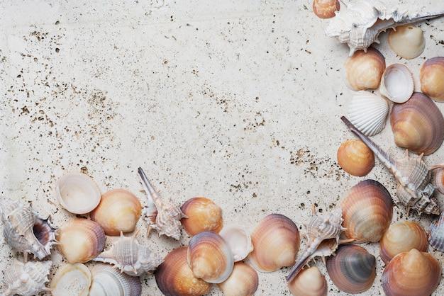 Sommerkonzept. muscheln auf dem hellen marmorhintergrund. ansicht von oben nach unten mit kopierraum für text