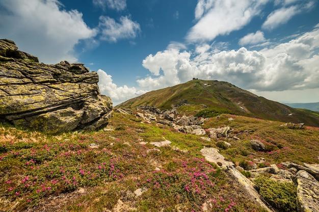Sommerlandschaft mit blühenden blumen im berg