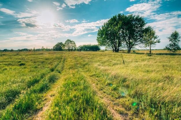 Sommerlandschaft mit eichen auf dem feld