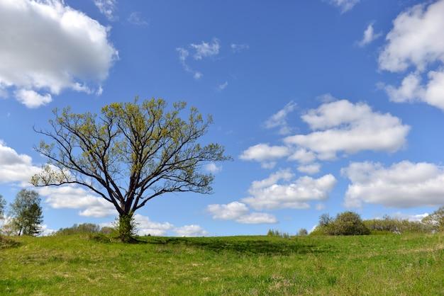 Sommerlandschaft mit grünem feld, wolken und großem baum