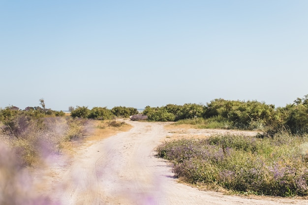 Sommerlandschaft mit grünen büschen und unscharfen blumen im vordergrund. naturthema. sonniger tag. straße zum strand.
