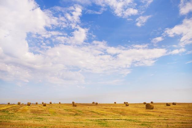 Sommerlandschaft mit weizenfeld und wolken
