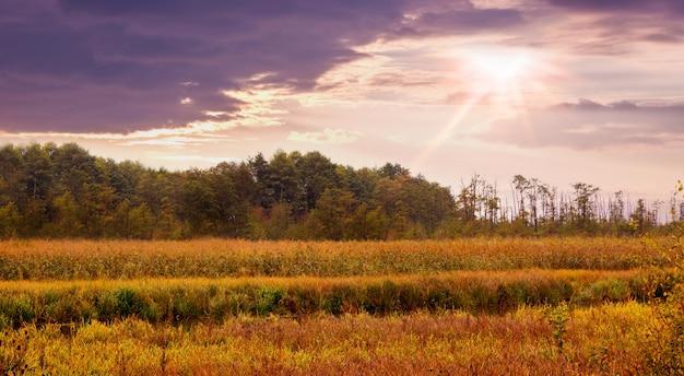 Sommerlandschaft: sonnenuntergang über wiese und wald, dichtes gras auf wiese