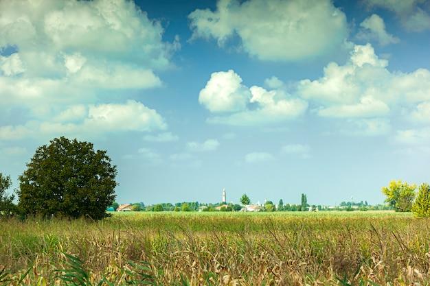 Sommerlandschaft unter blauem himmel an einem sonnigen tag