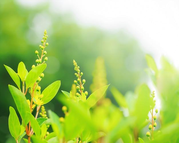 Sommerniederlassung mit frischen grünen blättern