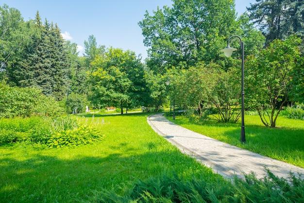 Sommerparkbäume und -gassen an einem sonnigen tag.