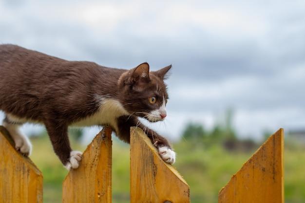 Sommerporträt einer katze, die entlang eines hölzernen zauns auf einem hintergrund der natur geht. ein braunes und weißes kätzchen geht entlang eines holzzauns. eine katze namens busia. 10