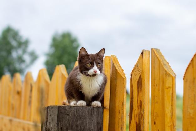 Sommerporträt einer katze, die entlang eines hölzernen zauns auf einem hintergrund der natur geht. ein braunes und weißes kätzchen geht entlang eines holzzauns. eine katze namens busia. 11