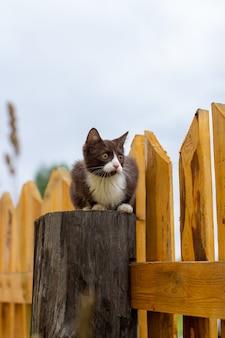 Sommerporträt einer katze, die entlang eines hölzernen zauns auf einem hintergrund der natur geht. ein braunes und weißes kätzchen geht entlang eines holzzauns. eine katze namens busia. 12