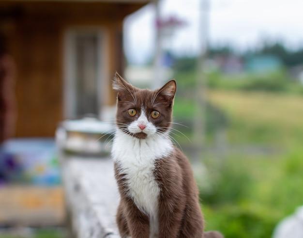Sommerporträt einer katze, die entlang eines hölzernen zauns auf einem hintergrund der natur geht. ein braunes und weißes kätzchen geht entlang eines holzzauns. eine katze namens busia. 13