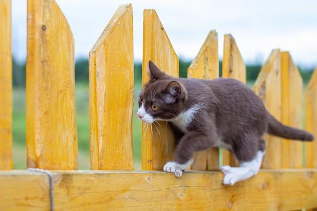 Sommerporträt einer katze, die entlang eines hölzernen zauns auf einem hintergrund der natur geht. ein braunes und weißes kätzchen geht entlang eines holzzauns. eine katze namens busia. 3