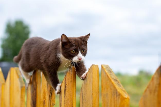 Sommerporträt einer katze, die entlang eines hölzernen zauns auf einem hintergrund der natur geht. ein braunes und weißes kätzchen geht entlang eines holzzauns. eine katze namens busia. 9