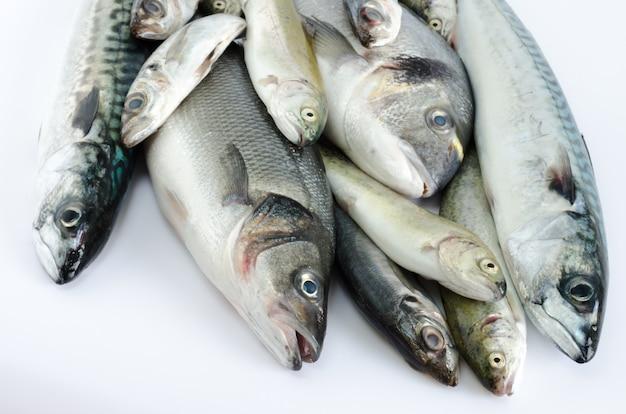 Sommersprossiger fisch variierte auf weißem hintergrund.