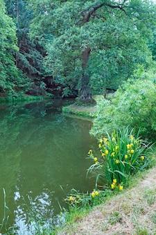 Sommerstadtpark mit see und gelben blumen