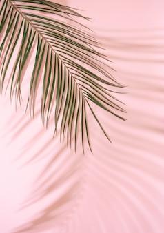 Sommerstrand-tagesszene mit tropischen plams schatten auf rosa. minimale tropische anordnung des sonnenlichts.
