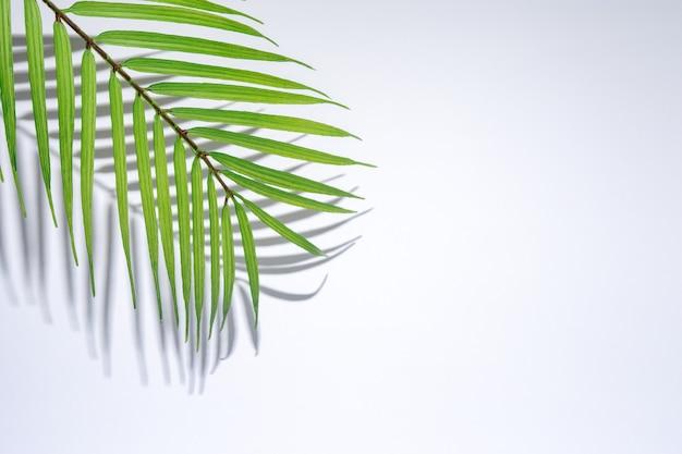 Sommerstrandhintergrund mit tropischen palmblättern und harten schatten