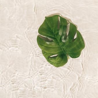 Sommerszene mit grünem monsterblatt im wasser.