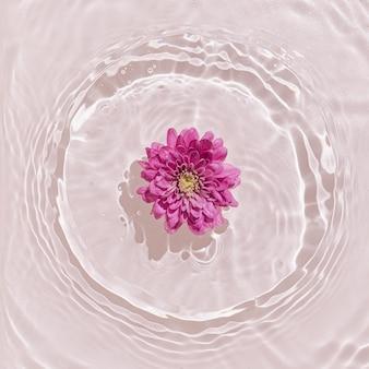 Sommerszene mit rosa gänseblümchenblume im wasser.