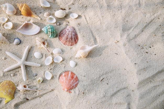 Sommerzeitkonzept mit muscheln und seesternen am strandsandweiß