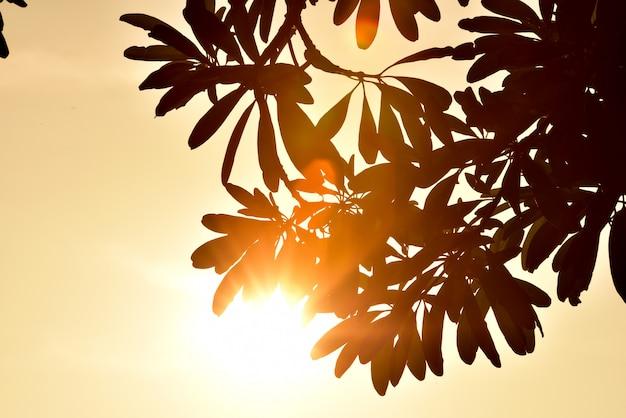 Sonnenaufgang am morgen. frische grüne blätter mit himmel