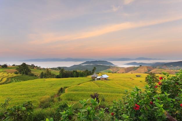 Sonnenaufgang bei terassenförmig angelegtem paddy field in mae-jam village, provinz chiang mai, thailand