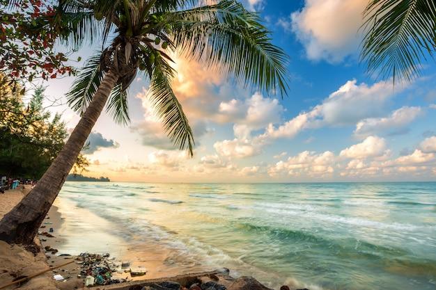 Sonnenaufgang des frühen morgens über kokosnussbaum und abfall