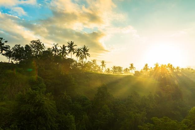 Sonnenaufgang über dschungel