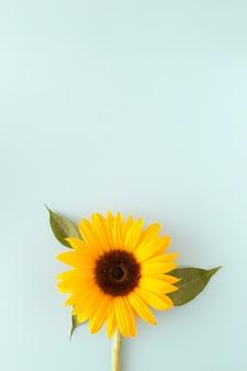Sonnenblume auf blauem hintergrund mit großem kopienraum. frühling sommer blumenkonzept. schöne natürliche blume.