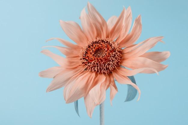Sonnenblume auf einem grünen papierhintergrund minimalistischer blumenhintergrund